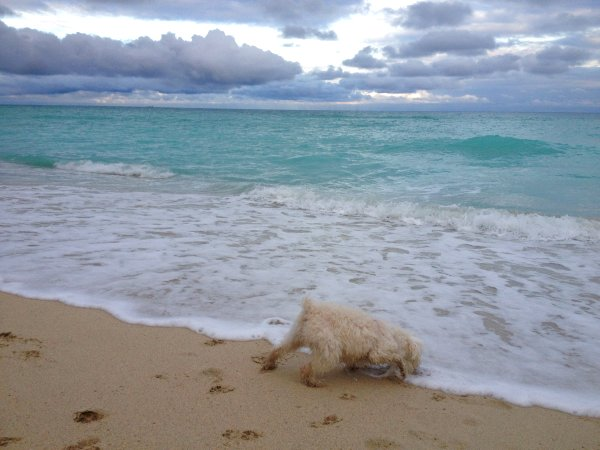 Thor en la Playa