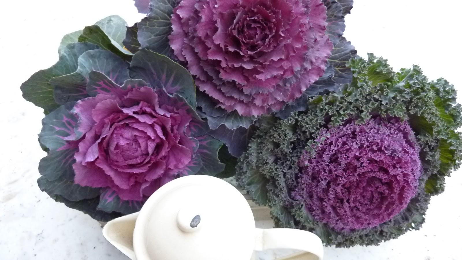 My new old life voglia di primavera for Cavolo ornamentale