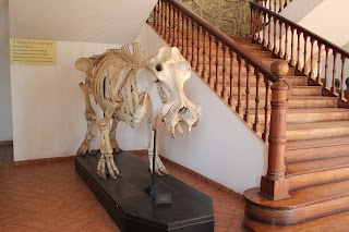 Hippo Skeleton