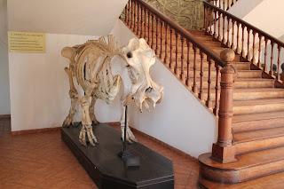 Hippo Skeleton