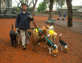 Paseador de perros