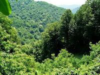 δάσος των Σκουριών