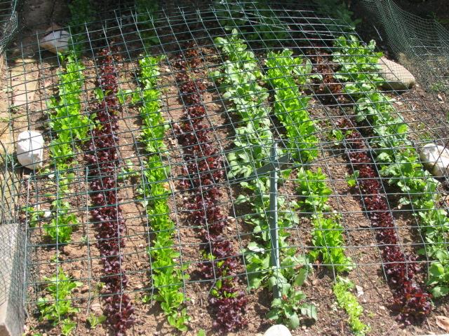 La magia di un piccolo orto aprile 2011 - L orto in giardino ...