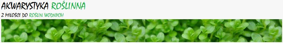 Akwarystyka roślinna