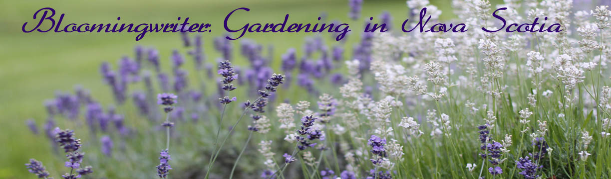 Bloomingwriter: Gardening in Nova Scotia Blog of author and gardener Jodi Delong.