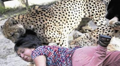 Istri Diterkam Cheetah Suami Asyik Memotret [ www.BlogApaAja.com ]