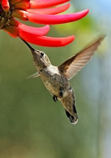 Google's Hummingbird Algorithm