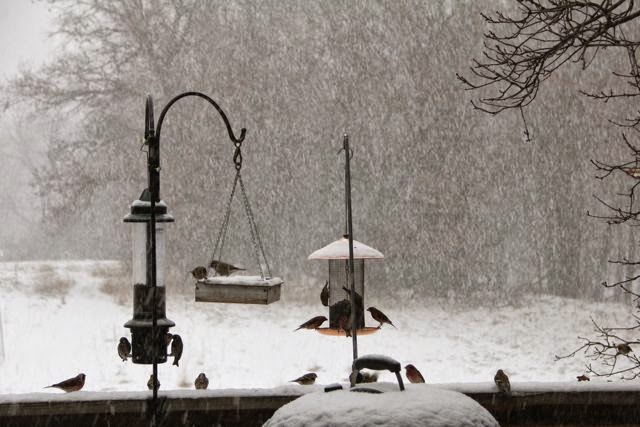 birds of a feather, and others, at the feeders