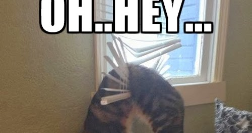 cat+stuck+in+the+blinds+dr+heckle+funny+wtf+memes you're home early dr heckle