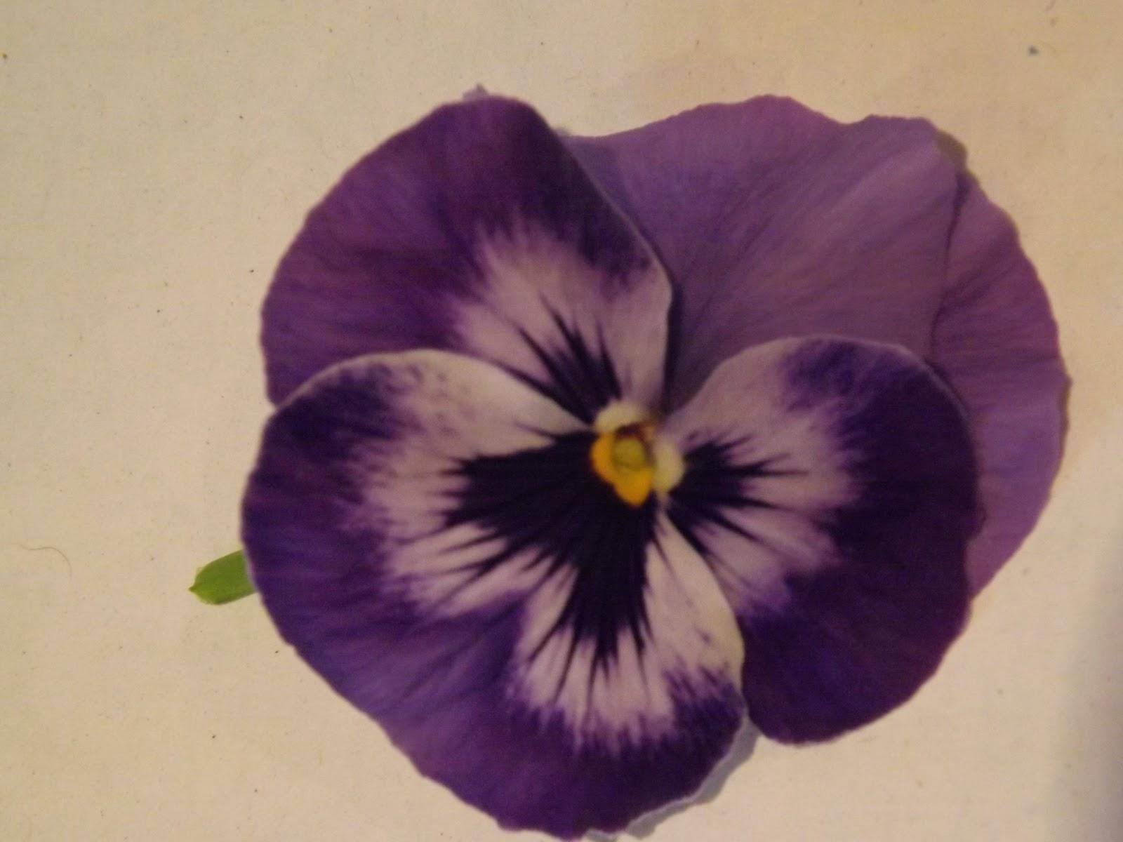 celtic flower tattoo joy studio design gallery best design. Black Bedroom Furniture Sets. Home Design Ideas