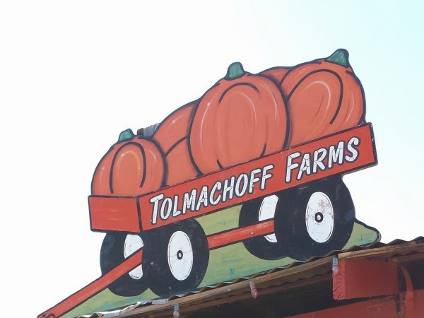 Corn Maze & Pumpkin Patch at Tolmachoff Farms!