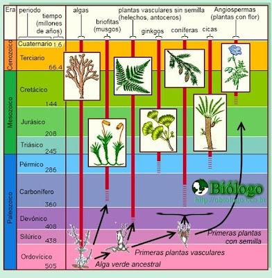 gimnospermas evolução plantas