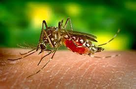 Νοσήματα,κουνούπι,αρρώστια,υγεία,αντιμετώπιση