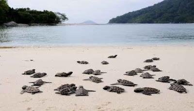 Pulau Durai