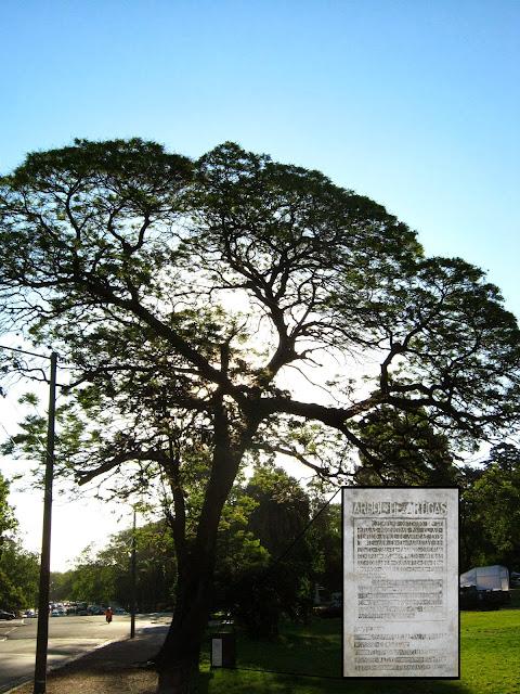 Artigas arbol parque Prado