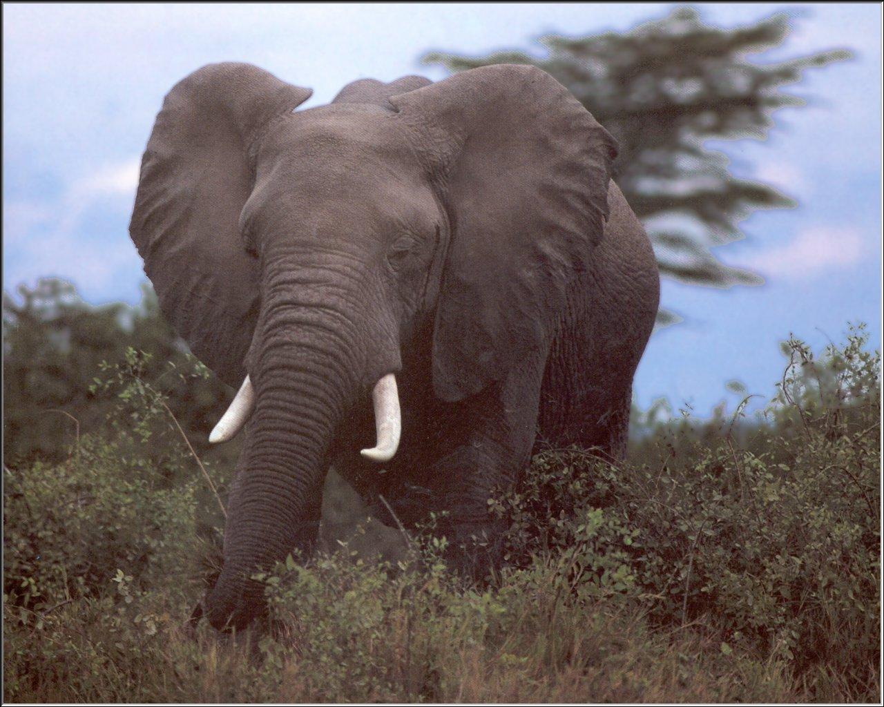 imagenes de animales de selva - Fotos de los gorilas, animales en la selva Fotonostra