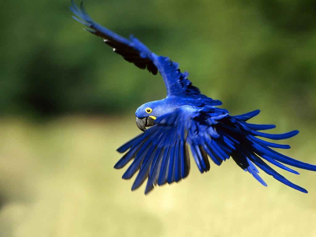 Rare Species Of Birds Rare Birds - Fl...