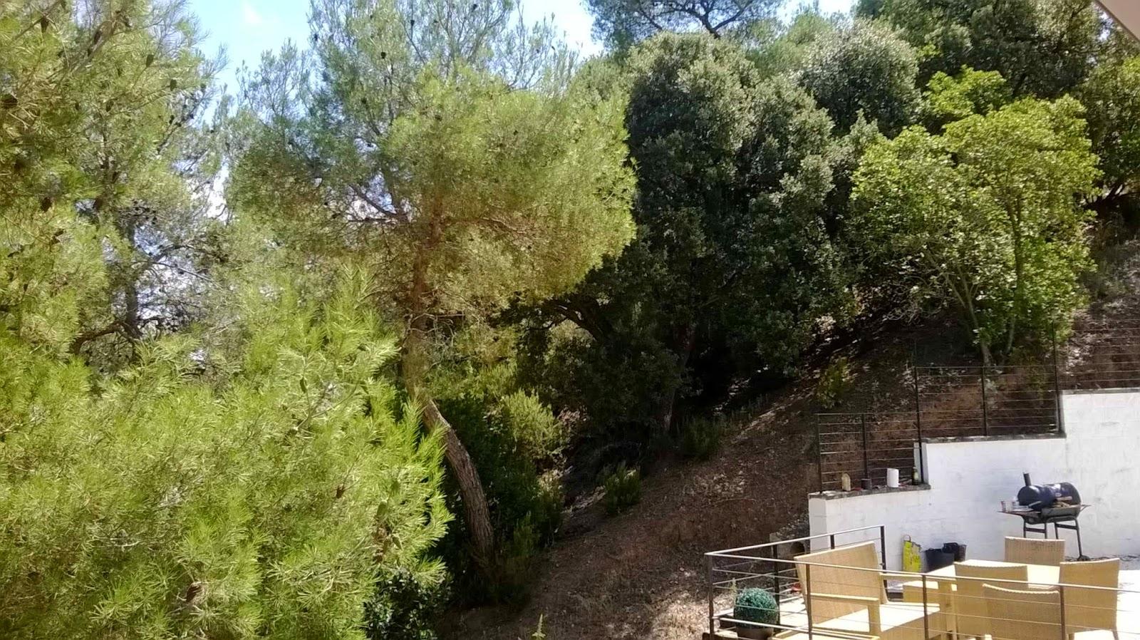 Serviciosdejardineriabasica jardineria barata solicitud for Jardineria barata barcelona