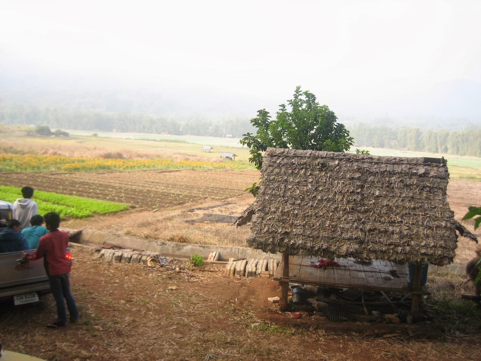 samoeng-north-thailand-farm