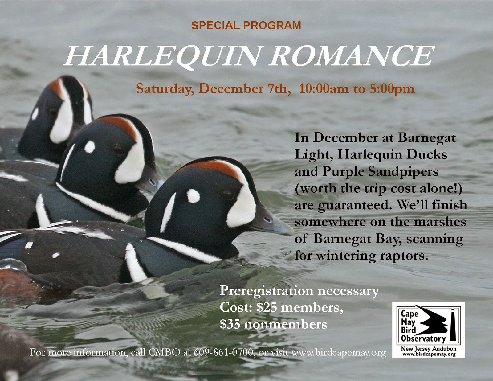 Harlequin Romance, December 7th