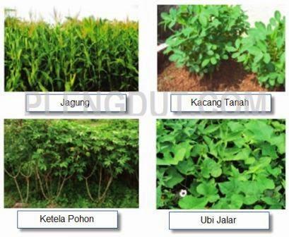 Beberapa jenis tanaman di daerah perbukitan