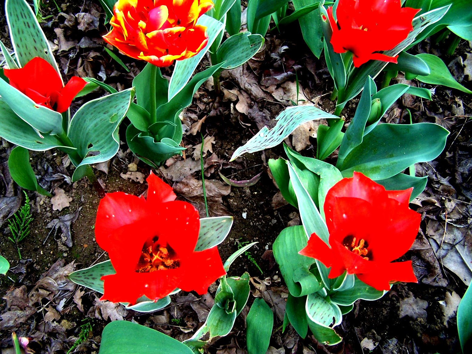 Bienvenue dans mon jardin a fill sur sarthe avril le for Bienvenue dans mon jardin