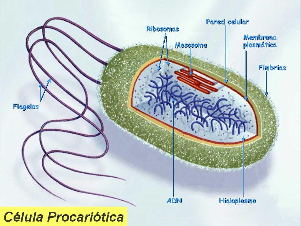 Blog AForMar 3: Diagrama de celula procariota