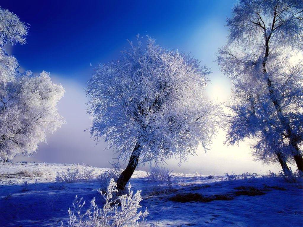wallpaper nature winter