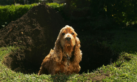 pet Compreendendo o Comportamento dos Cães