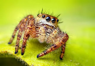 foto gambar laba-laba dari dekat
