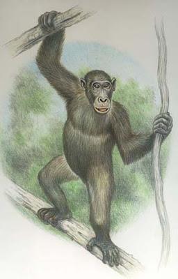 primates del mioceno Morotopithecus