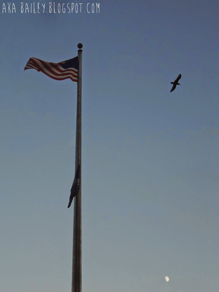 American flag with soaring eagle/seagull