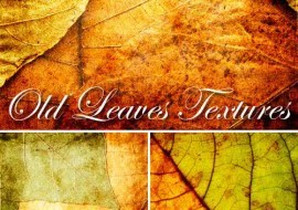 Old Leaves vector, vector leaves old, old leaves vektor, jpg leaves vector, leaves vector grunge, grunge leaves vektor, free download background leaves vector, download bacground vector