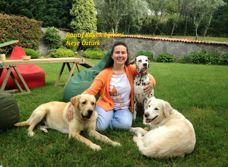www.pozitifim.net | Pozitif Köpek Eğitimi Neşe Öztürk