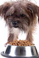 How to Stop Dog Food Aggression