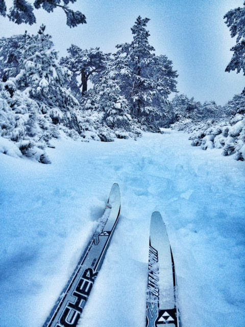 Zona alta del circuito de esquí de fondo de Navacerrada