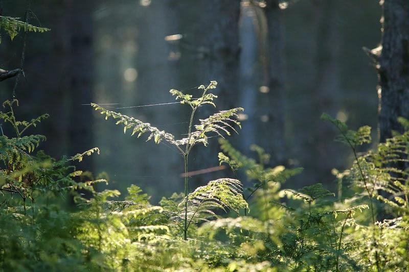 nature matin sous-bois forêt Fontainebleau Seine-et-Marne