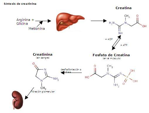 calculo renal acido urico enfermedad acido urico dieta contra acido urico colesterol