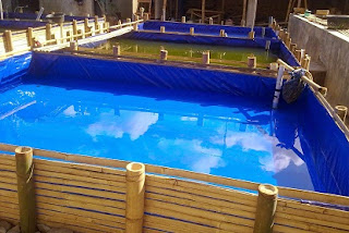 cara budidaya ikan lele kolam terpal,lele sangkuriang di kolam terpal,buku budidaya,analisis usaha,kolam terpal lengkapdalam kotak terpal,pembuatan kolam,