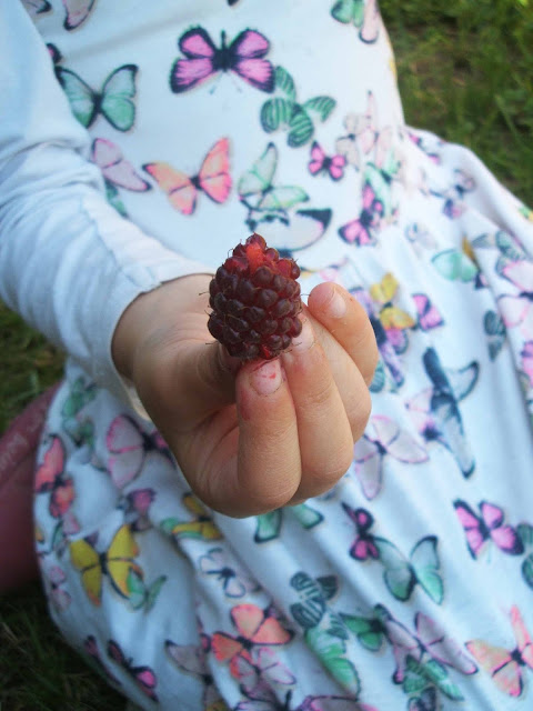 August on the allotment: tayberries and strawberries