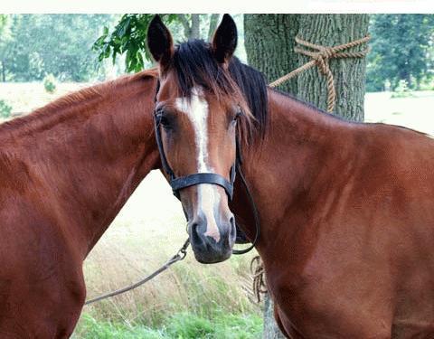 horse-funny-2012-06.jpg