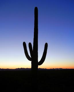 Sunset in the Sonoran desert