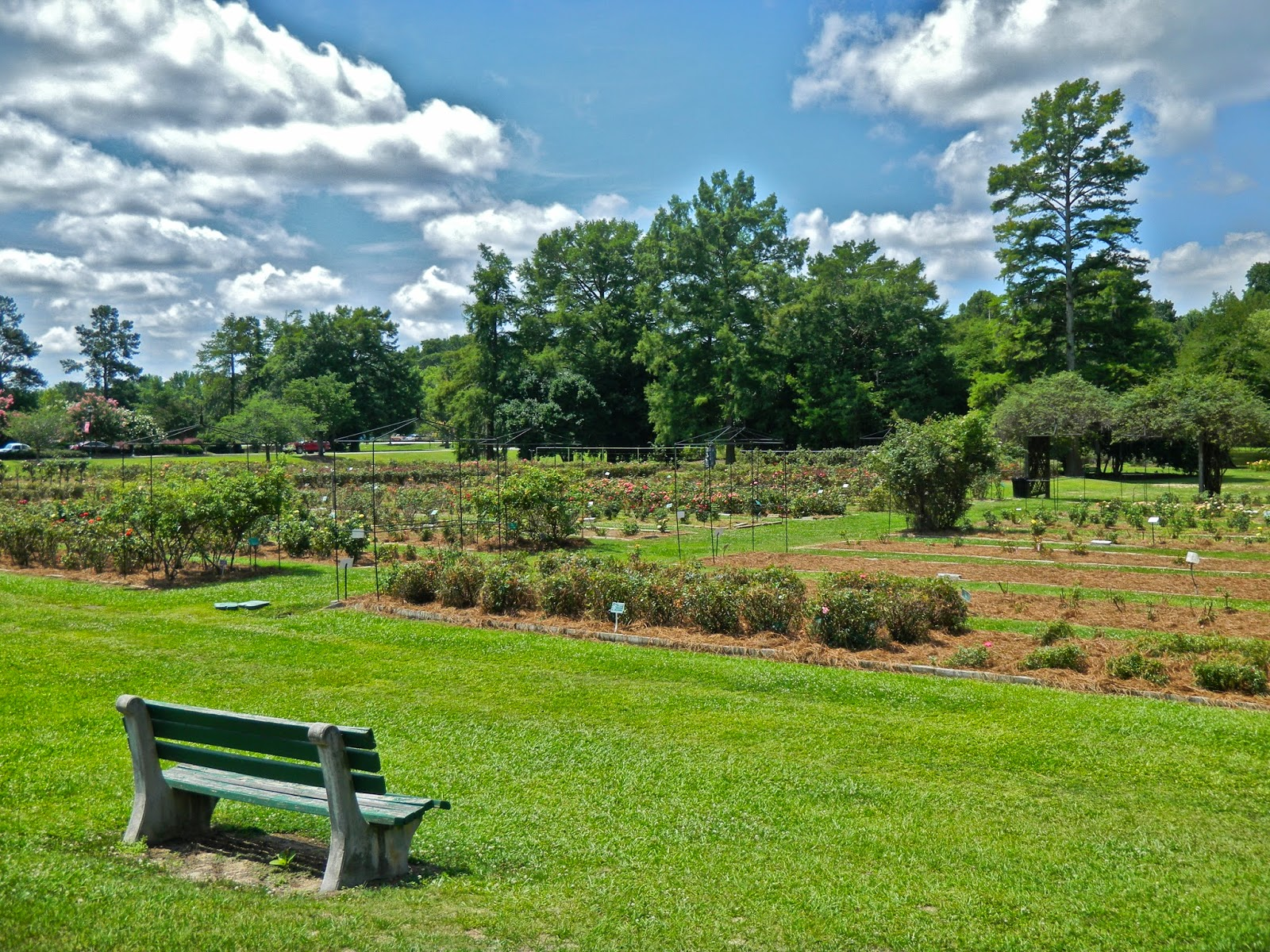 Rose beds at Edisto Memorial Gardens in Orangeburg, South Carolina