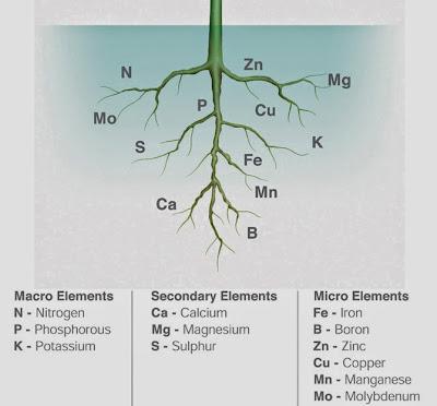 Τα μακροστοιχεία και μικροστοιχεία των φυτών