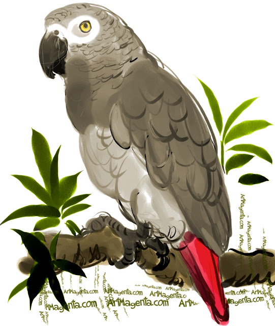 African Grey Parrot sketch painting. Bird art drawing by illustrator Artmagenta