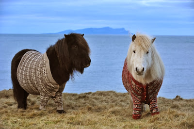 """Posing in their winter woollies, the ponies were marking the Year of Natural Scotland by sporting some rather plush knitwear that wouldn't seem out of place in any trendy city hangout,"" the site explains. ""It's safe to say both Fivla and Vitamin didn't seem to mind all the attention their custom-made attire brought them."""