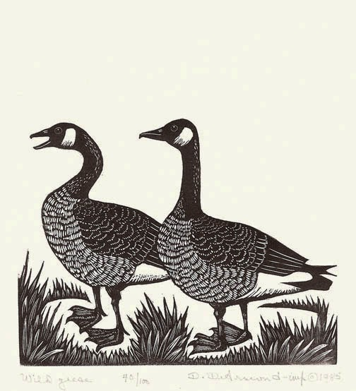 Wild Geese Drawing Wild Geese