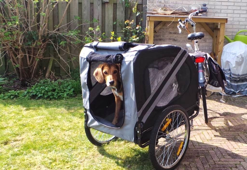 hond vervoeren in auto