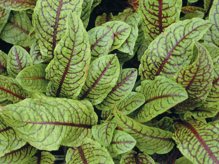aquascape your landscape amazing water plants, Natural flower