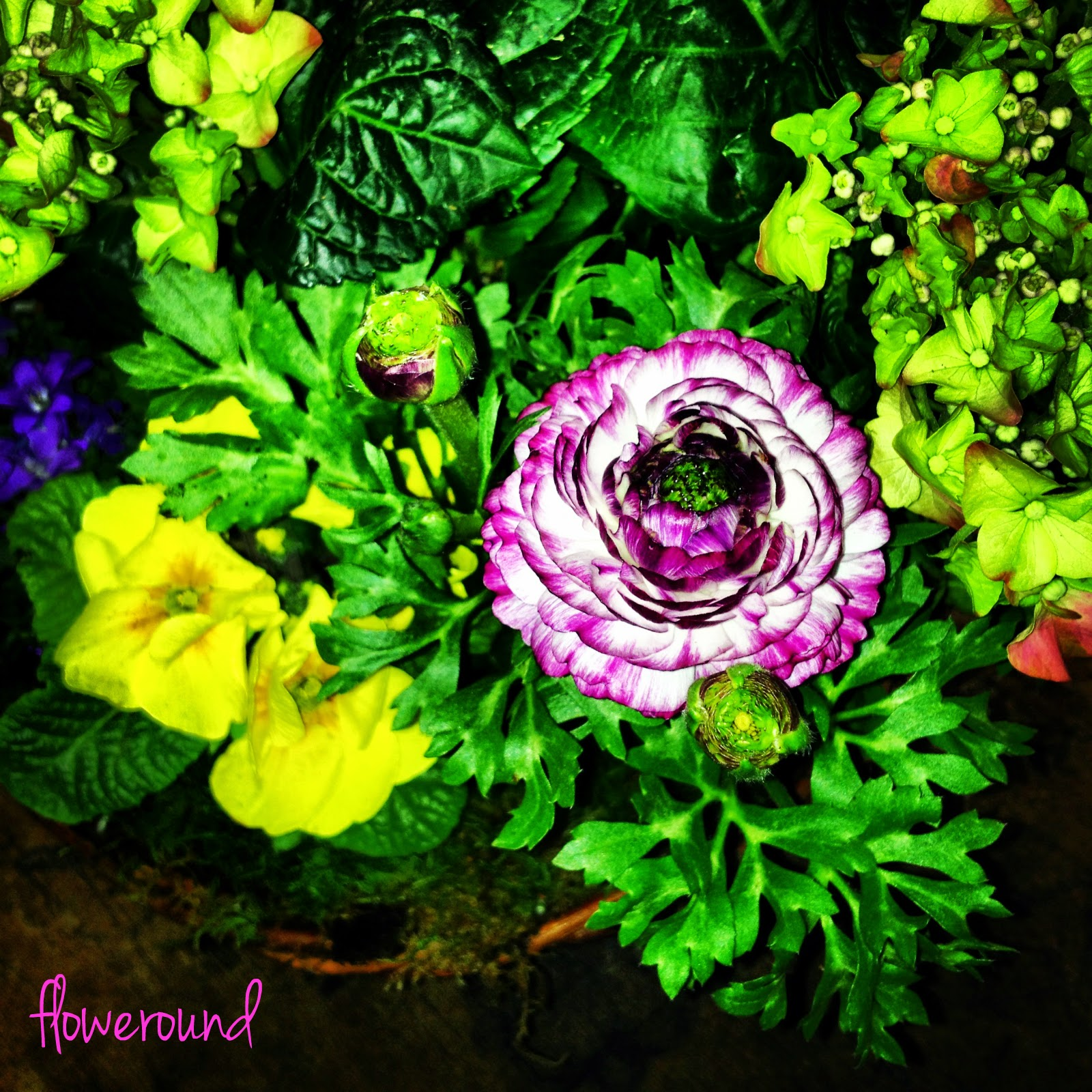 FLOWEROUND - certainly, for you.: Plants Arrangement